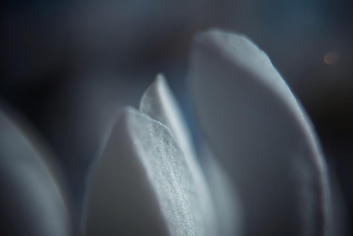 150422 magnolia 6 liten andraideal