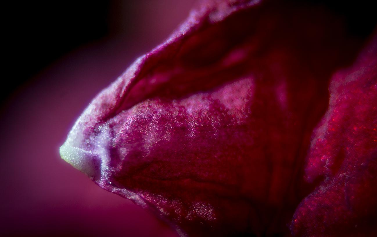 161001 amaryllis andraideal 4 liten