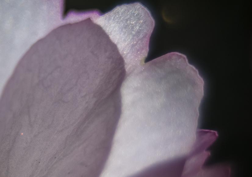 180505 5 cropped ida alander